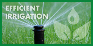 Efficient Irrigation Systems in Pink
